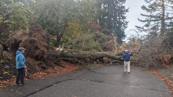 PUD: Falling trees, limbs cause of most power outages Sunday; plus tips for staying safe