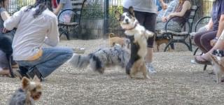 Attacks at Local Dog Parks