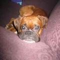 Two Missing Boxers. Have You Seen Them? (Update: Boxers Found!)