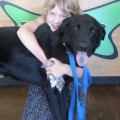 Our 'Forever Home' Dog of the Week: Bobby