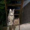 Found Tabby Cat near QFC