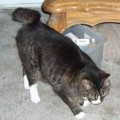Found: Half-Tailed Cat, 48th/212th