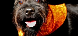 Mountlake Terrace Pet Licenses Due