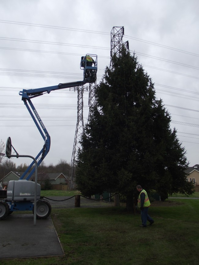 In this photo from 2012, lights were installed on the Brier Holiday tree without incident; this year the lift failed and stranded a Brier city worker 30 above the ground for almost two hours