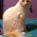Lost kitten in MLT: Have you seen Somo?