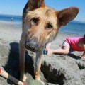Reminder: Enter your pooch in the 'Most Awesome Dog' contest by Oct. 24