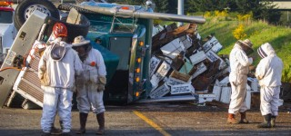 Rolled semi spills load of bees at I-5 and I-405 interchange near Lynnwood