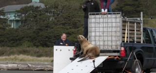 PAWS plays key role in sea lion pup's rehabilitation and release home