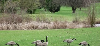 Ballinger Park Master Plan community meeting set for April 14