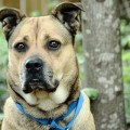 PAWS teams up with Animal Planet, ASPCA for free pet adoptions on Saturday