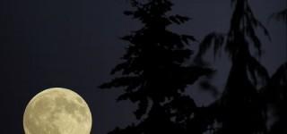 Scene in Mountlake Terrace: Big moon
