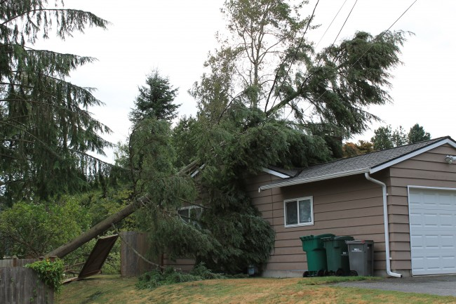 Three houses were damaged by three fallen trees all within a half-block of each other in the 22600 block of 45th Avenue West.