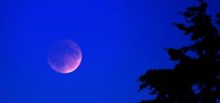 Scene in Mountlake Terrace: Supermoon Lunar Eclipse