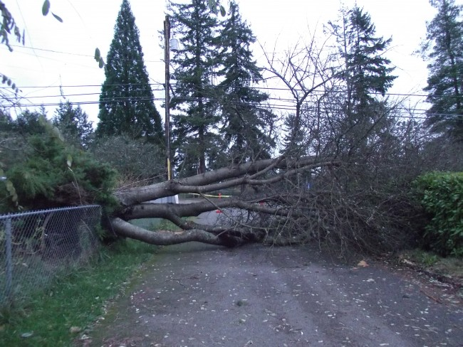 A tree smashed a fence and blocked a driveway at St. Pius X Catholic School in Mountlake Terrace. (Photo by Doug Petrowski)