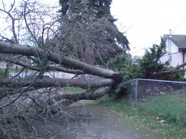 Storm damage, Nov. 18 011-1