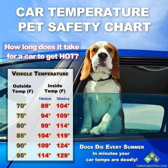 Dogs-Temperature.jpg