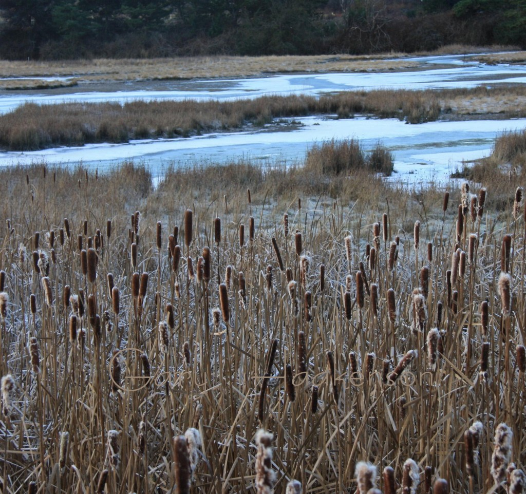 Former Edmonds Mayor Gary Haakenson took this photo recently of the frozen Edmonds Marsh. You can see more of a Haakenson's photos at his exhibit at the Edmonds Library.