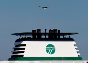 In this file photo, a bald eagle flies over a ferry on the Edmonds-Kingston route. (Photo by Bryon Briscoe)