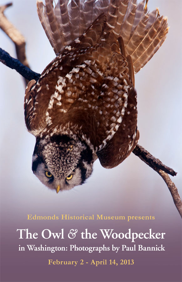 Owl_Woodpecker