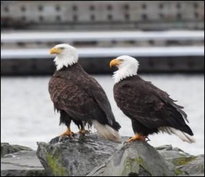 20130205_eagles 1