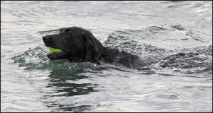 From LeRoy Van Hee: A dog enjoying the good life at the Edmonds off-leash dog beach Monday.