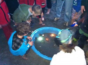 Investigating sea creatures at last year's Moonlight Beach Walk.