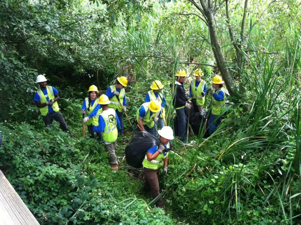 Volunteers removes invasive plants in the Edmonds Marsh.