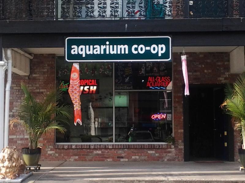 aquarium co op my edmonds news