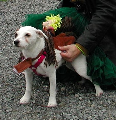 Miley, the Rodeo Horse, winner of the Sports Team Dog category.