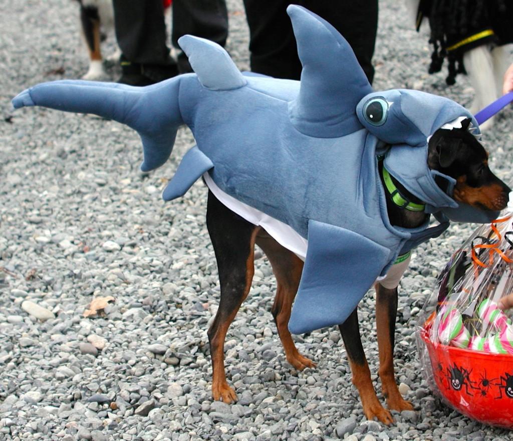 """Bailey the hammerhead shark, named """"Funniest."""""""