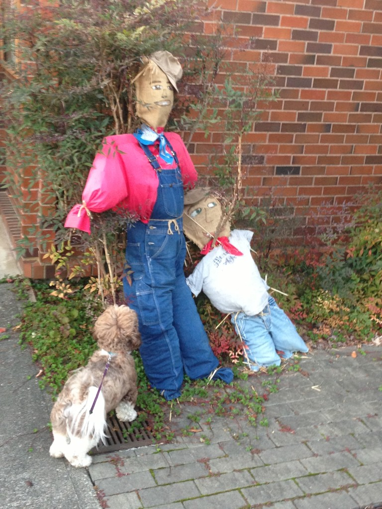 """Jennifer Benson's dog Yugo checks out the scarecrows outside the First Church of Christ Scientist at 6th and Maple Friday night. """"He was scared of them and bolted"""" just after the photo was taken, she said."""