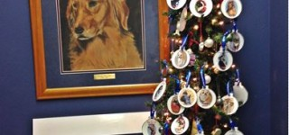 Giving tree for pets at Edmonds Veterinary Hospital