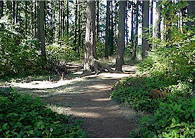 A mature second growth forest with nature trails covers the northwest portion of the park. (Photo from Snohomish County Parks website)