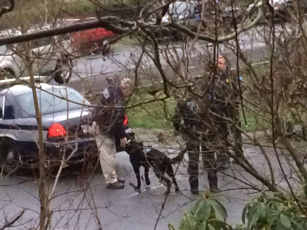 Kizzie Jones sent in these photos of police action and a K-9 track in the Perrinville neighborhood Monday morning. According to Edmonds Police spokesman Sgt. Mark Marsh, police were looking for suspects in a car prowl.