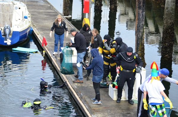 A team of more than a dozen local divers volunteered to help Hayes complete his senior class project to clean up underwater debris at the Edmonds Marina.  Here divers bring up bags of trash collected from the bottom.  Other volunteers on the float hauled the garbage up to the central collection area on the main dock.