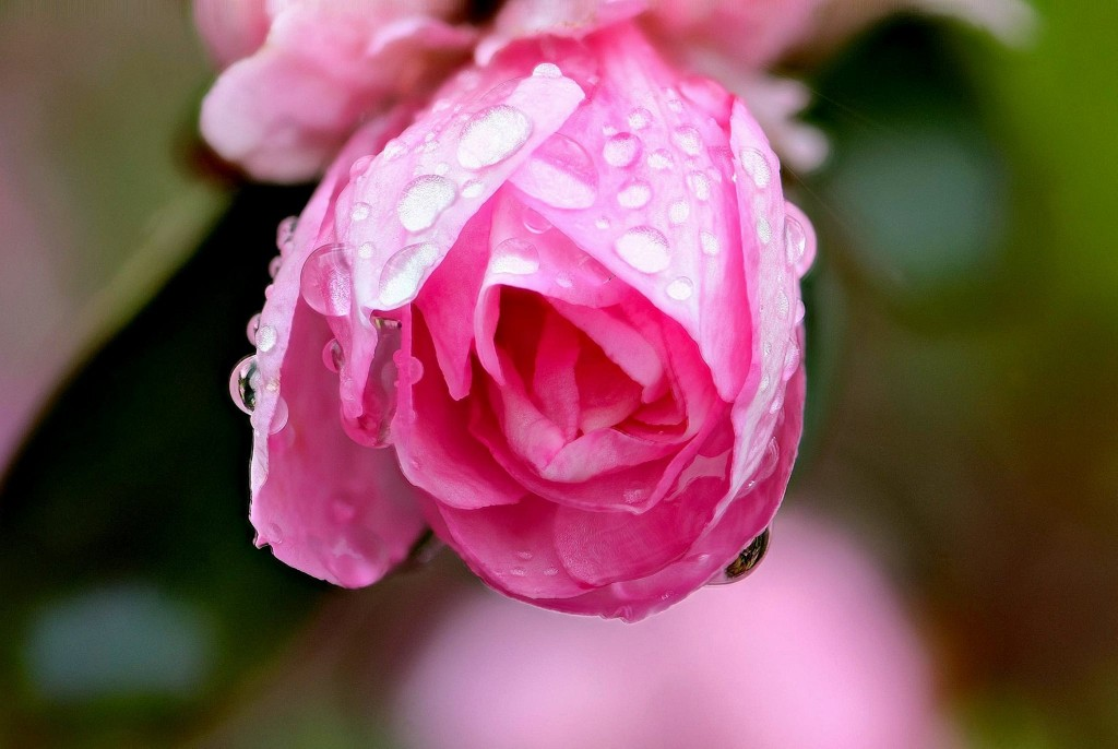 From Dan Palmer, a lovely close-up of a well-watered flower.