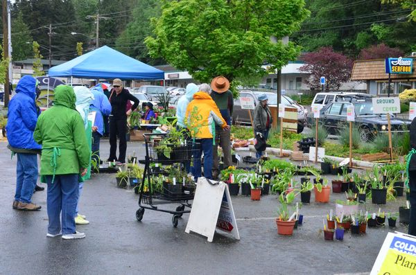 """The annual Edmonds Floretum Garden Club plant sale was a popular destination Saturday morning, and the early birds got the best pick. """"We had this place packed with plants when we opened at 9 a.m."""" said Barbara Chase, plant sale organizer. """"One person bought more than $100 worth! By 10 a.m. most were gone."""" The sale benefits Floretum scholarships to college students studying horticulture."""