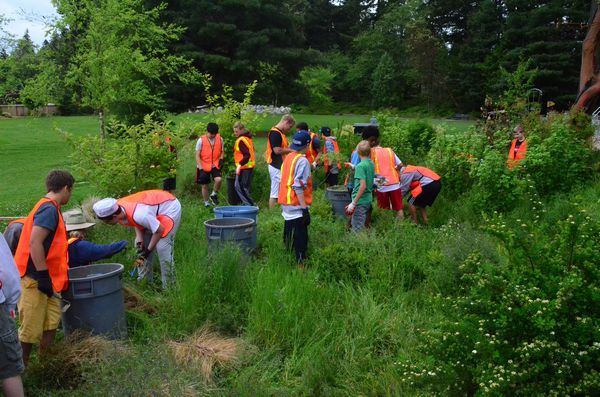 The students dove right into the work, quickly filling plastic garbage cans with weeds.