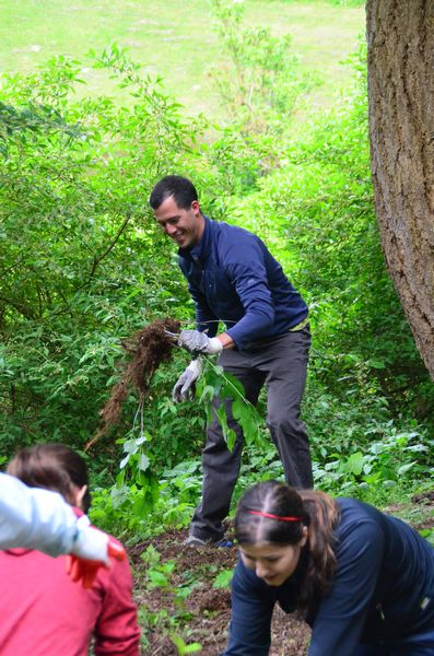 Pulling invasive plants out by the roots helps ensure that they won't simply regrow.