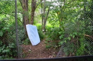 A drive behind the Burlington Coat Factory reveals one of many vacant, overgrown patches of land.  The mattress and backpack provide mute testimony to the use of this land as a homeless encampment.
