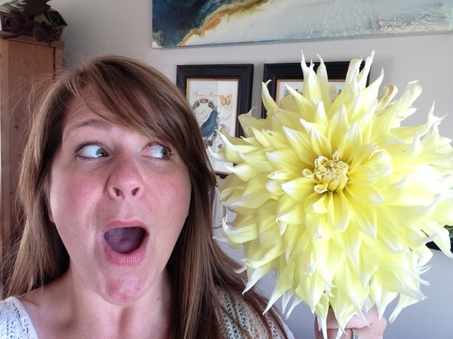 From Shannon Black, Edmonds arts publicist extraordinaire, more dahlias! Have a photo of dahlias, the city of Edmonds' official flower, you'd like to share? Email to teresa@myedmondsnews.com