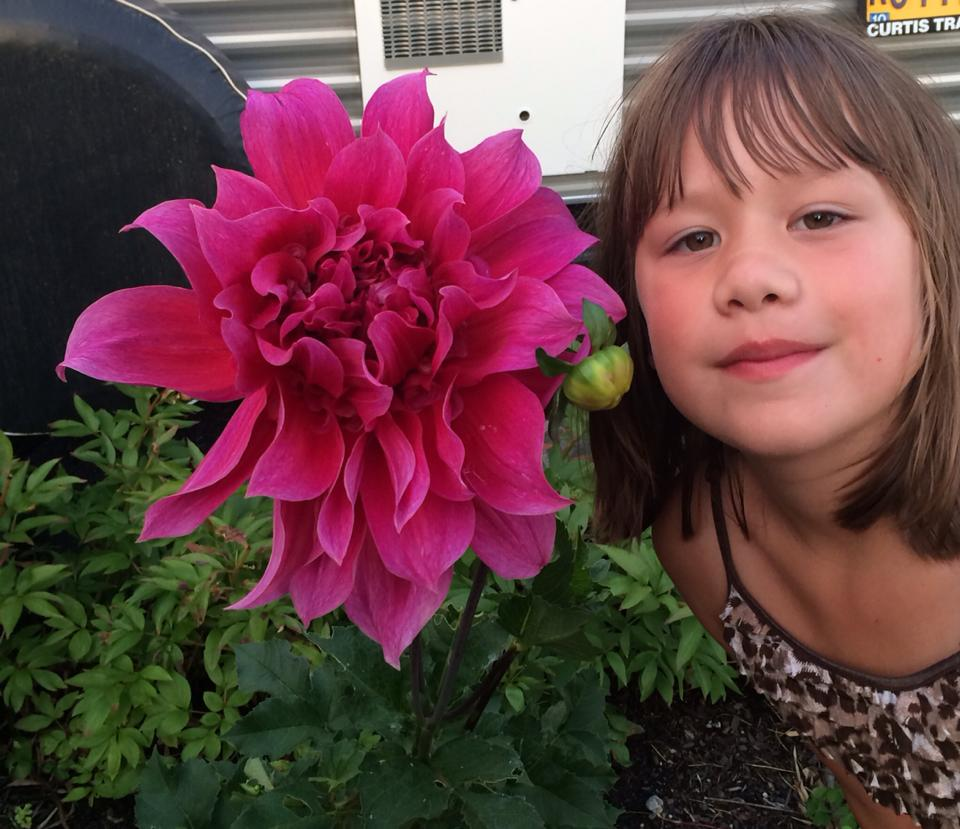"From 11th Place North: ""Dahlia in my yard vs. my 7-year-old's head!"""