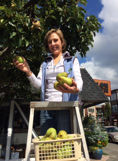 Gail Sarvis, owner of Salon 512 in Edmonds, shows off a few of the pears she picked today from the lone tree alongside her Fifth Avenue hair salon. The annual harvest provides a treat for friends and customers who are fast enough to grab a pear before the supply is gone.