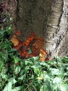 Hutt trees more-1