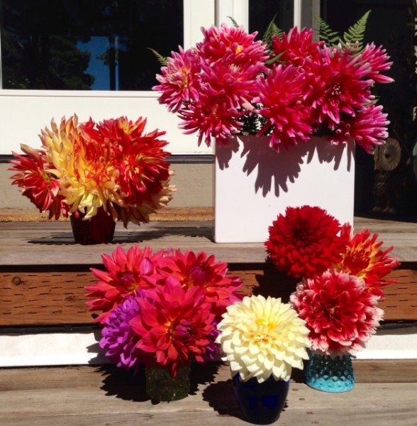 """From Gaye and Peter Hinchcliffe, who sent this earlier this month but we missed it so are posting now. Says Gaye: """"All summer long we have dahlia bouquets placed throughout the house. We love them. So many beautiful colors! Thanks for posting the photos from everyone!"""""""