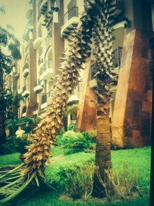 A broken palm tree as a reminder of the storm's aftermath.