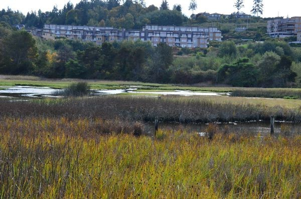 The Edmonds Marsh remains at the center of the controversy over proposed increases to surrounding buffers and setbacks, which would restrict development at Harbor Square. (Photo by Larry Vogel)