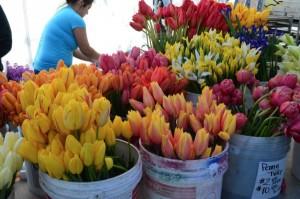 Garden-Market-flowers-2015-600x397