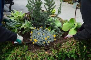 A sampling of Floretum plantings at Hazel Miller Plaza Tuesday.