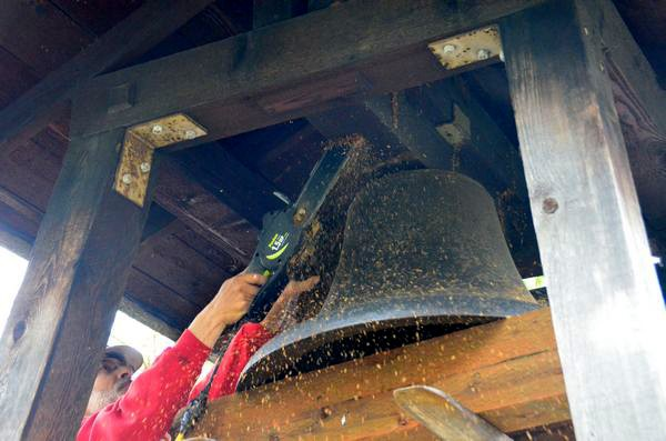 he last timbers holding the bell in place give way to the chain saw.